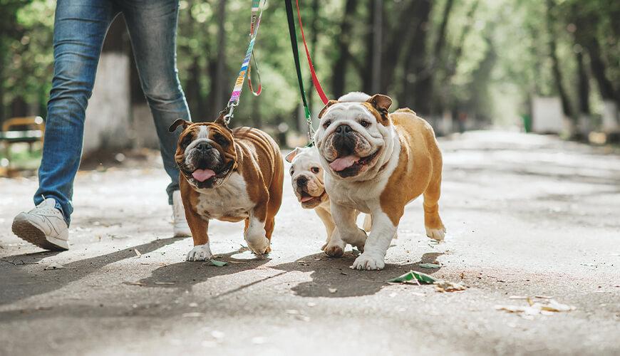 Recomendaciones al sacar a tu mascota a pasear